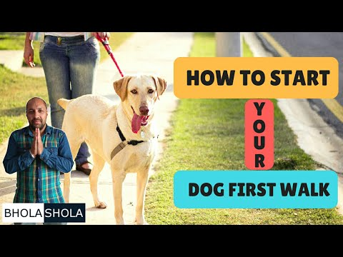 Pet Care - How To Start Your Dog First Walk - Bhola Shola