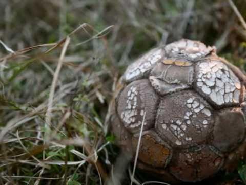Adventure Soccer in Swaziland, Africa