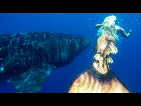 MERMAID MELISSA SWIMMING WITH WHALE SHARKS: THE BIGGEST FISH IN THE OCEAN!