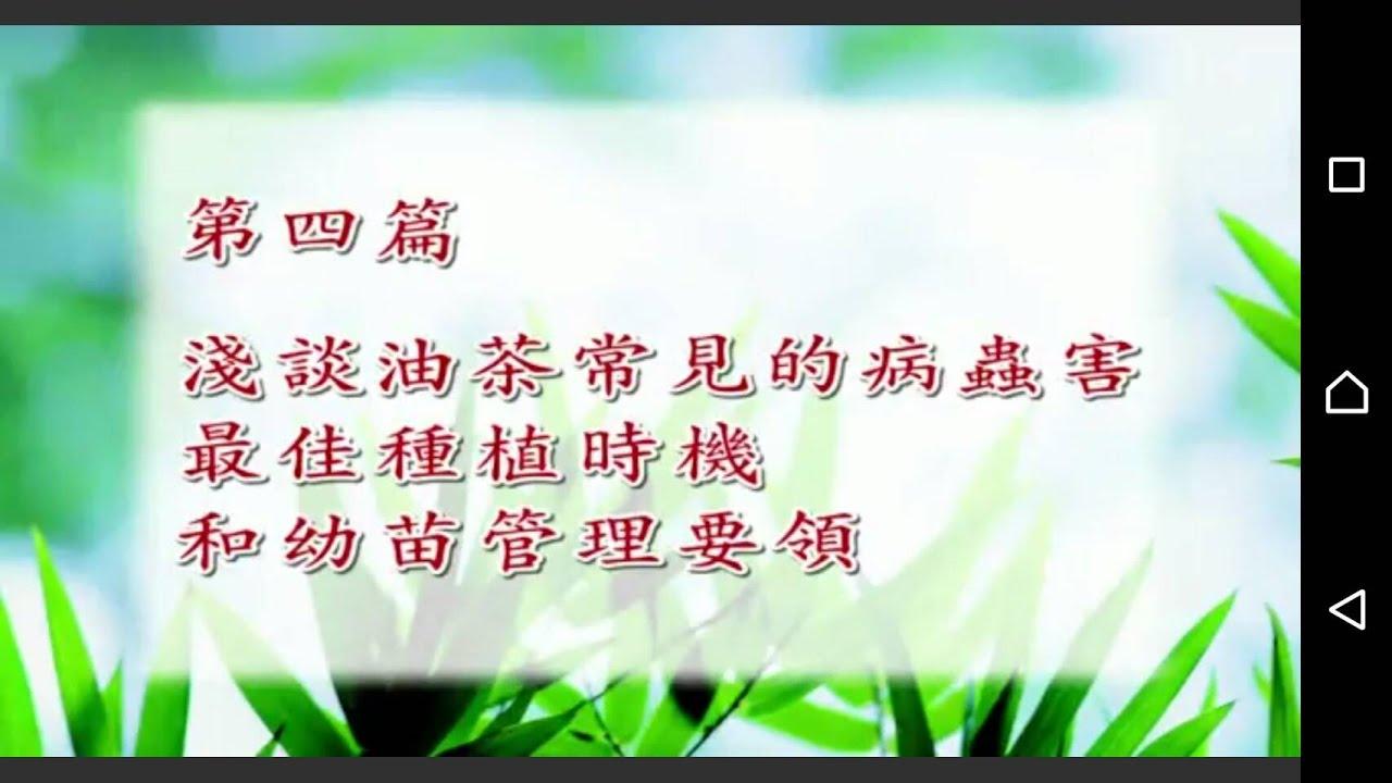 十倍產值 油茶(苦茶)科學種植管理 第四部分 字幕版 - YouTube