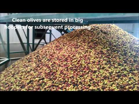 New application of Pulsed Electric Field in olive oil production