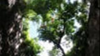 yeshuve en prananayaka [ Malayalam Christian song ]