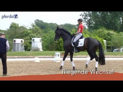 Bild: Die Pferdiathek über Reit- und Pferdeausbildung von PferdiaTV von Thomas Vogel