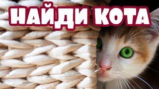 ЕСЛИ НАЙДЕШЬ ВСЕХ КОТОВ  — ТЫ КРУТ! 🐈 Найди кота на фото | БУДЬ В КУРСЕ TV