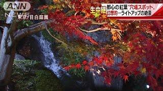 """住宅街に幻想的絶景・・・都心の紅葉""""穴場スポット""""(16/11/26)"""
