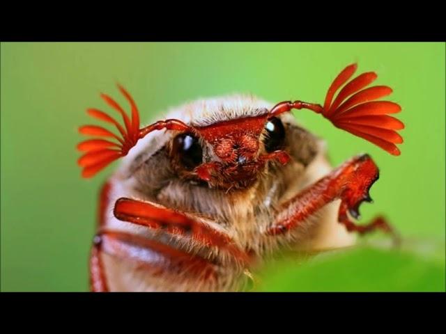 Das Insektensterben