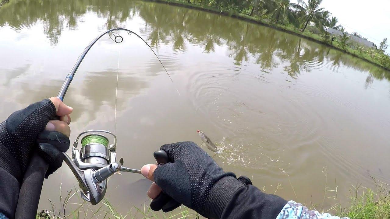 Câu Lóc Bằng Mồi Cá Sắt | Cá Sắt Orichi – Cicada – Fishen – Phần 1