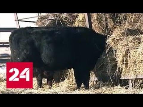 В Курганской области семейная ферма дала вторую жизнь целому селу - Россия 24