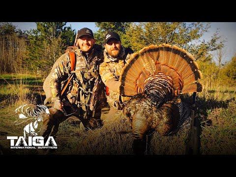 Wild Turkey Hunting in Ontario!