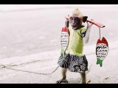 Atraksi Topeng Monyet Lucu Dari Naik Motor Sampai Meniru Gerakan