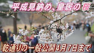 平成見納めの皇居の桜 乾通りの一般公開始まる 4月7日まで