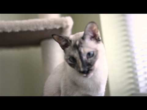Animal Planet My Pet's Gone Viral - N2 the Talking Cat