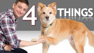 If Your Dog can Shake You Won't Believe What Else He can Do! *NEW*