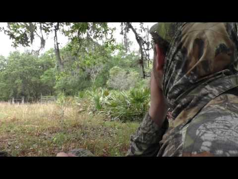 2016 South Florida Osceola Turkey Hunt