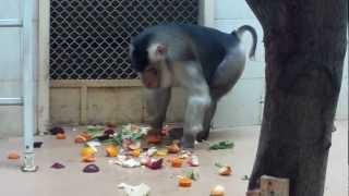 Monkeys - Zoo in Lodz, Poland