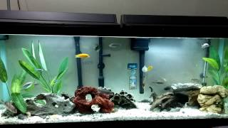 55 Gallon African Cichlids Aquarium Tank