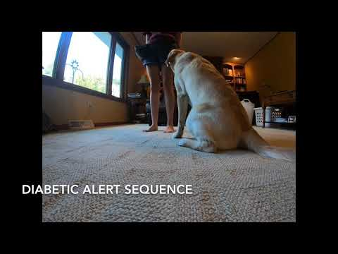 Service Dog In Training Tasks and Tricks