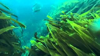 Kina Cave Diving Fiordland New Zealand
