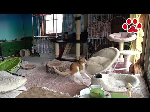 猫の趣味【瀬戸のまや日記】 Cat hobby