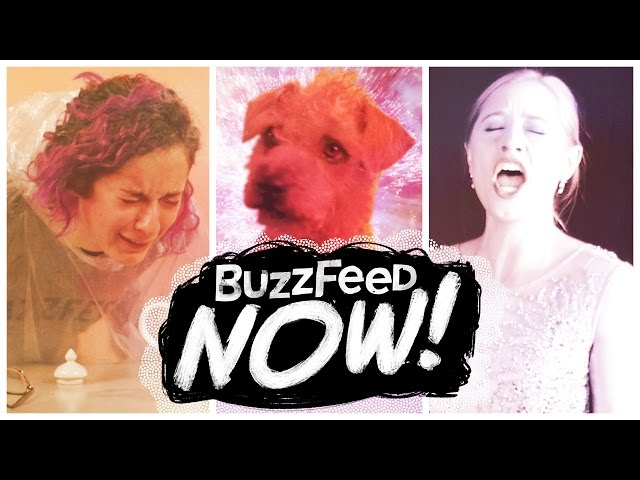 BuzzFeed Now: Dogs, Hands-Free Coffee, Craigslist Opera