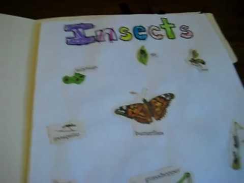 Insect Craft Activities For Preschoolers