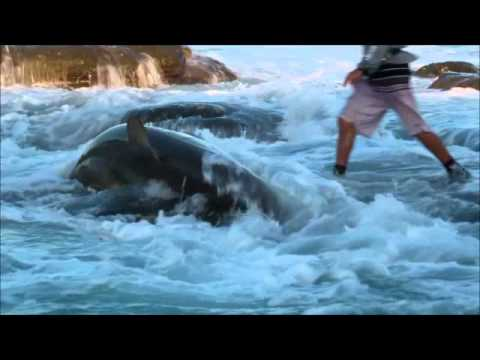 Sardine Run 2011 - Bronze Whaler