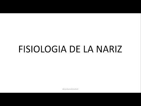 Fisiologia nasal - Fisiologia de la nariz