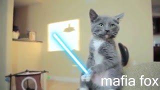 Коты - Звездные войны - Подборка - приколы - Cats - Star Wars