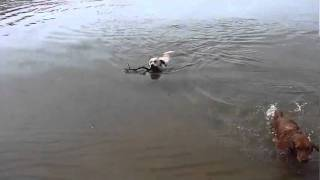 Hobie and Rio Swim Race to the Stick Thumbnail