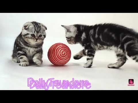 If you like kittens You will love this intro!