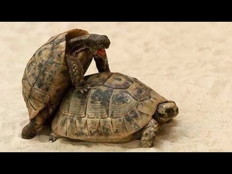 5 Most Bizarre Animal Rituals