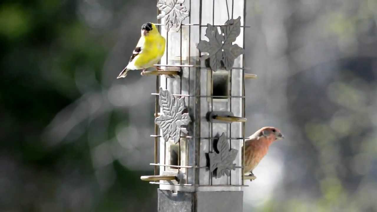 how to make a finch feeder