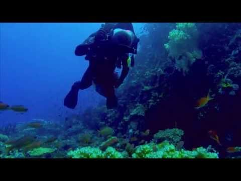 Scuba Diving in the Philippines' Verde Island Passage | California Academy of Sciences
