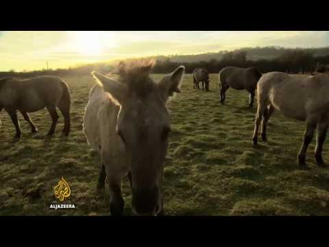 33852 governance Welt Al Jazeera The Netherlands and Belgium seal land swap deal