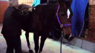 Matrix-Rhythmus-Therapie am Pferd