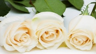 Красивые цветы видео