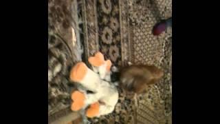 Собака насилует корову!!!!