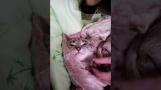 Обращение призидента кошачьей России