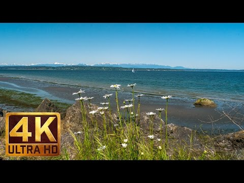 4K Video Nature Relaxation   Water Sounds  Seattle Discovery Park, PART 1  1.5 hours
