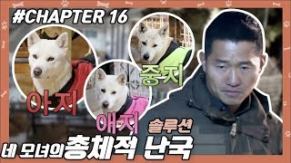CHAPTER 16 | 네 모녀의 일촉즉발 권력 싸움 ! #강형욱 #개통령 #개훈련사 [개는 훌륭하다]