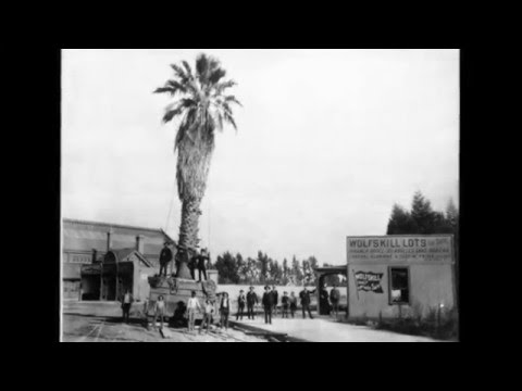 The Oldest Palm Trees in L.A.