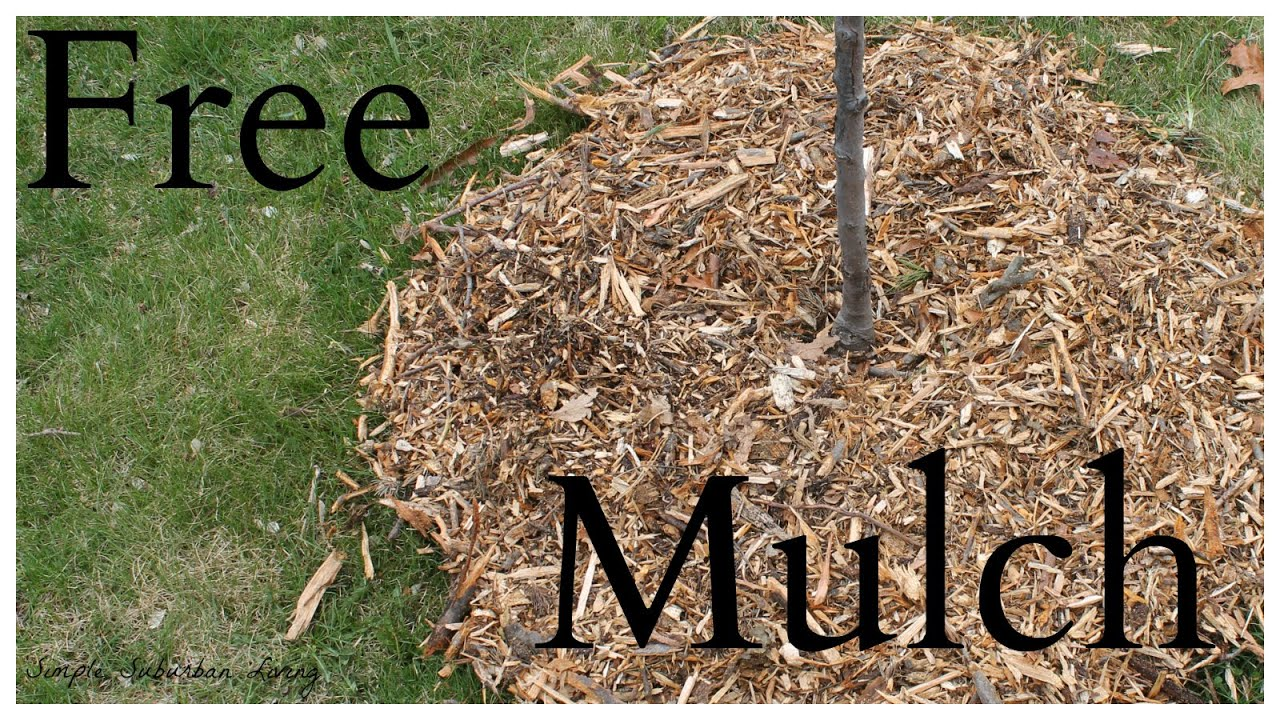 Where To Get Wood Chips ~ Where to get free mulch youtube