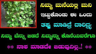 ನಿಮ್ಮ ಮನೆಯಲ್ಲಿ ಮನಿ ಪ್ಲಾಂಟ್ ಇದ್ದರೆ ಈ ವಿಷಯಗಳನ್ನು ಮರಿಯದಿರಿ || money plant || divinekannada