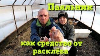 Расклев у цыплят//Паяльник рулит