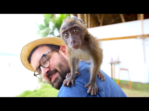 On Adopte Un Singe Philippines Port Barton Youtube