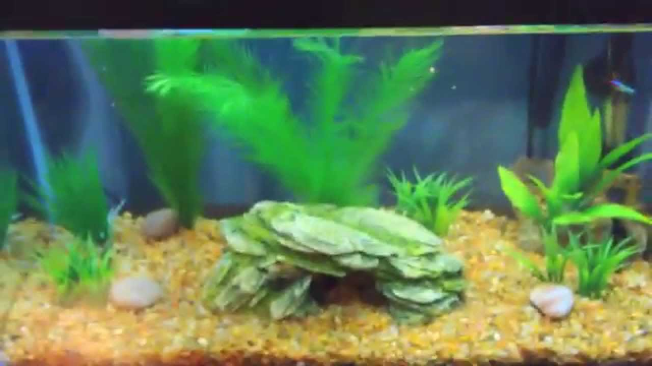 Freshwater fish for aquarium petsmart - Small Petsmart Haul Decorated 10 Gallon Tank