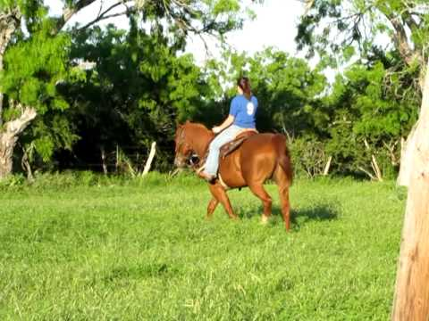 Lucky Sorrel Quarter Horse For Sale 2