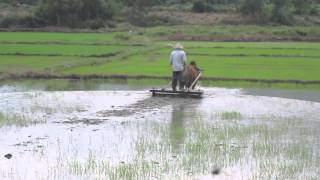Vietnam Rice Farming