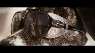 Солнцезащитные псы от Diesel(Рекламный ролик новой коллекции солнцезащитных очков от Diesel Dogs with Sunglasses - Diesel Summer 2012 Collection., 2012-06-26T18:47:54.000Z)