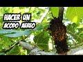 Como Hacer un ACODO AEREO Paso a Paso | Reproducir Plantas | La Huerta de Ivan